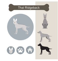 Thai ridgeback dog breed infographic vector