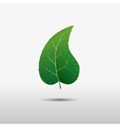 Green leaf of the tree icon vector image vector image