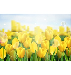 Yellow tulips flowers in the garden vector image vector image