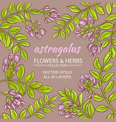 Astragalus frame vector