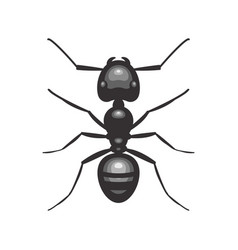 Black ant insect vector