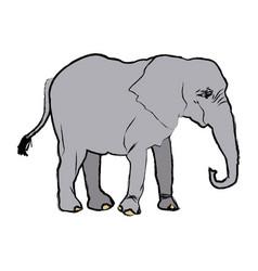 Elephant wild animal safari african vector