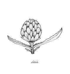 Fresh artichoke on a white background vector