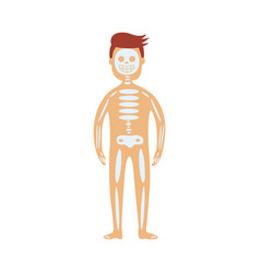 human skeletal system in male body - schematic vector image