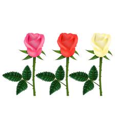 realistic detailed 3d color flower rose set vector image
