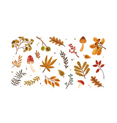set dried autumn leaves berries and mushrooms vector image