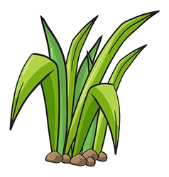 Plant vector image vector image