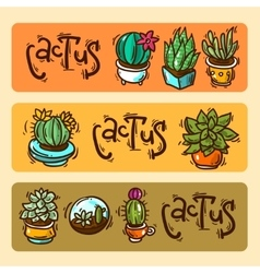 cacti and succulents vector image vector image