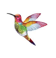 watercolor of colorful bird vector image