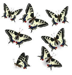Butterfly collection realistic swallowtail vector
