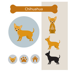 chihuahua dog breed infographic vector image