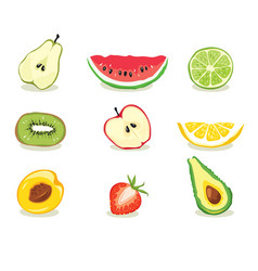 fruit slices vector image