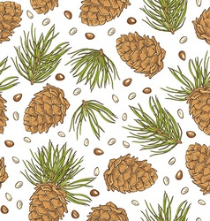 hand drawing pine cones and pine nuts on white vector image