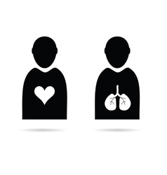 Heart and lungs in man icon vector