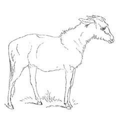 Lamb vintage vector