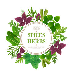 spices and herbs background fresh herb cooking vector image