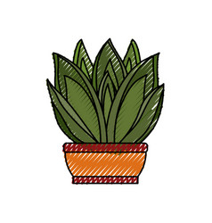 Succulent in potted vector
