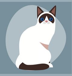 Cat breed siamese cute pet portrait fluffy white vector