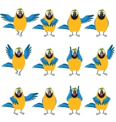 flat set macaw icons vector image