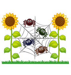 Spiders on web in sunflower garden vector