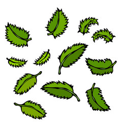 Mint leaves doodle style sketch isolated vector