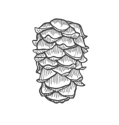 pinecone vector image