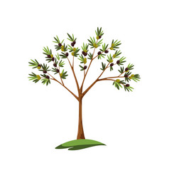 Alone green stylized olive tree with leaves and vector