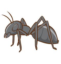 Black ant on white background vector
