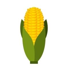 Corn cob isolated icon design vector