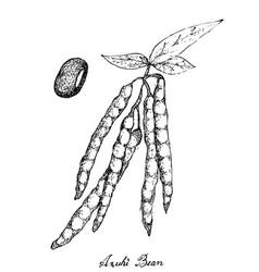 Hand drawn of adzuki bean plants vector