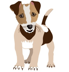 Jack Russell Terrier Puppy vector image