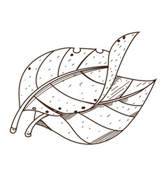 Leaves tobacco outline drawing for coloring on vector