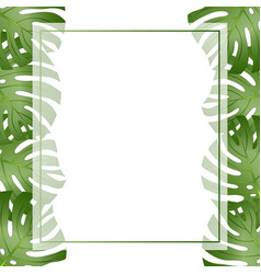 Philodendron monstera leaf banner card border vector