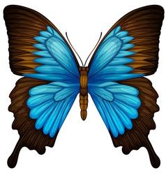 Blue Mountain Swallowtail vector image