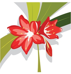 flower red lily vector image