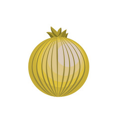 Fresh onion organ vegetable food vector