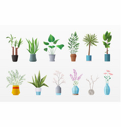 set of plants and flowers vector image