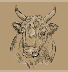 Surprised head bull hand drawing vector