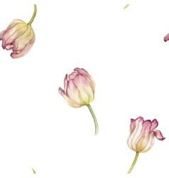 seamless pattern with watercolor pink tulip vector image