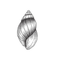conch shell dotwork art vector image