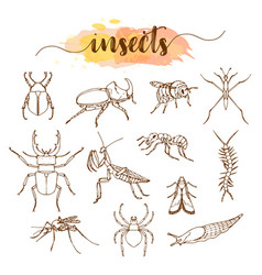 insects line art set on white background vector image