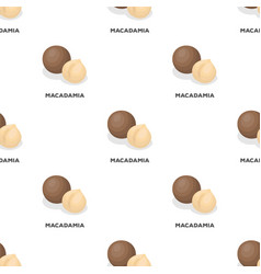Macadamiadifferent kinds of nuts single icon in vector