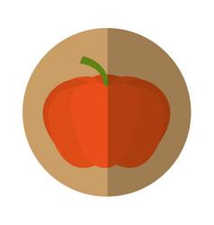 Pumpkin fresh vegetable isolated icon vector