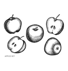 set hand drawn black and white apples vector image
