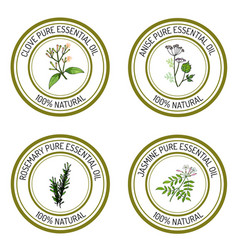Set of essential oil labels clove anise rosemary vector