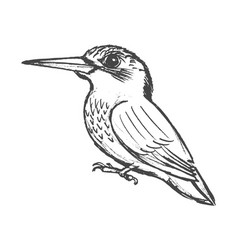Small bird kingfisher vector