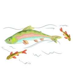 American rainbow trout vector