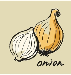 hand drawn onion vector image
