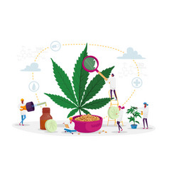 Scientist characters growing medical cannabis vector