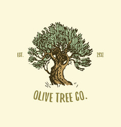 olive tree logo engraved or hand drawn isolated vector image